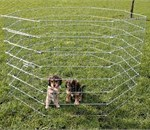 En hundegård er en god idé hvis der er krudt i din hund (foto lavprisdyrehandel.dk)